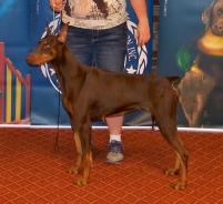 Ellen, Roberts, dog, breeder, aca, show, Ellen-Roberts, dog-breeder, aca-dog-show, pic01, picture