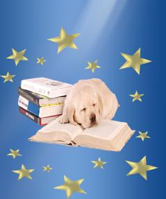 Ellen, Roberts, dog, breeder, aca, show, Ellen-Roberts, dog-breeder, aca-dog-show, pic19
