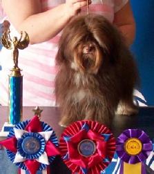 Ellen, Roberts, dog, breeder, aca, show, Ellen-Roberts, dog-breeder, aca-dog-show, pic10